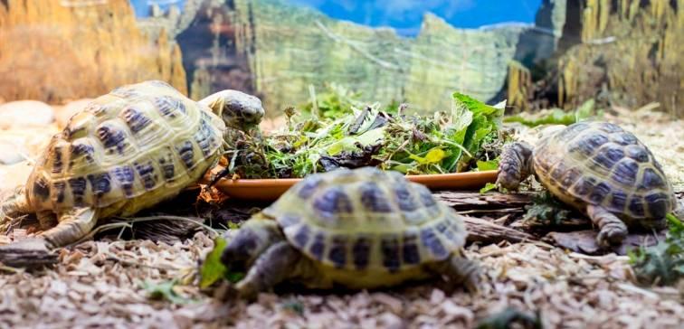 Среднеазиатская черепаха: содержание, уход, кормление, болезни | наши лучшие друзья