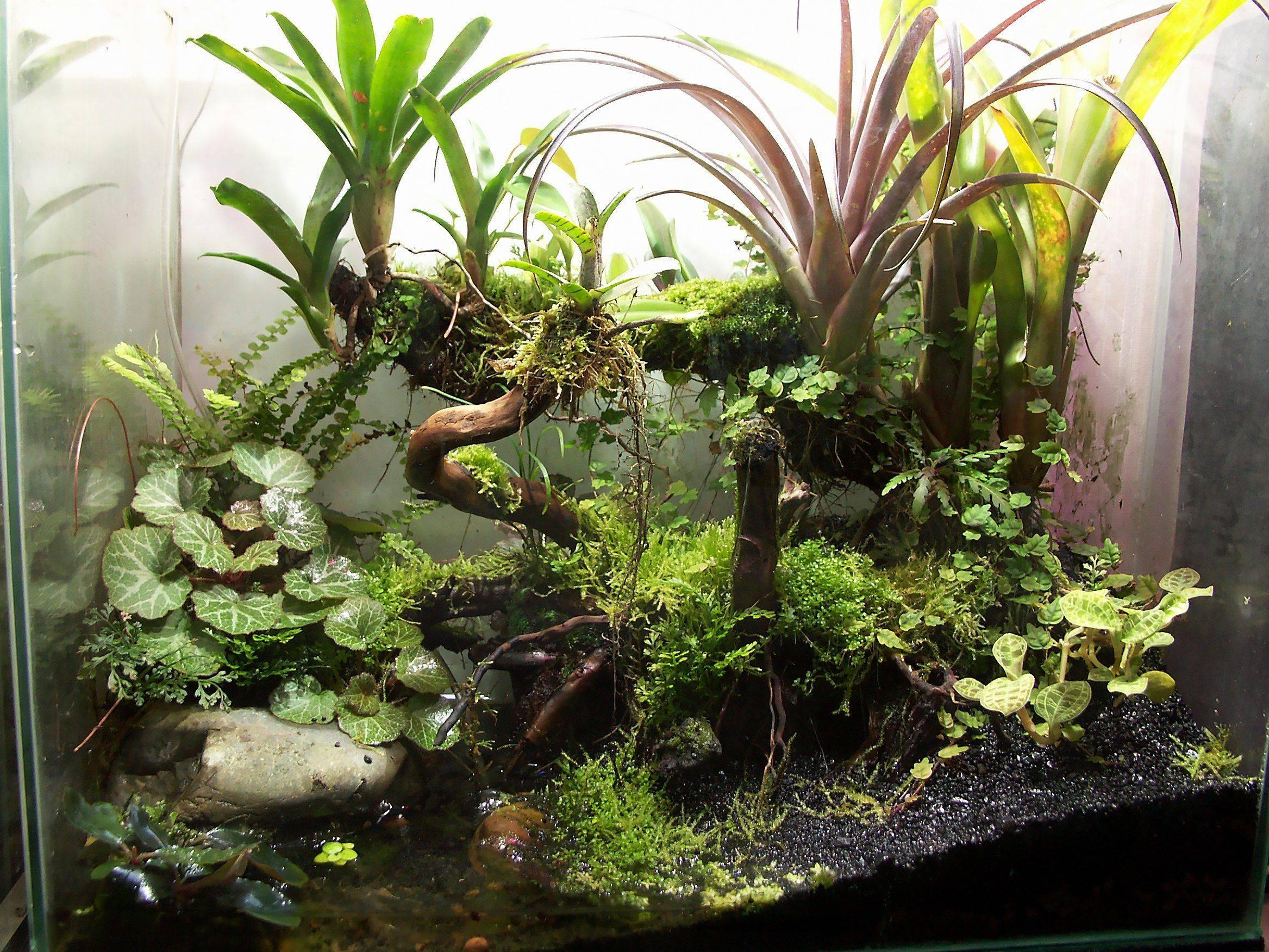 Как сделать террариум с растениями: 5 простых шагов - flosium.ru