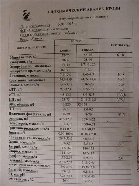 Делать анализ чего крови биохимический для ггтп гепатите крови анализы при