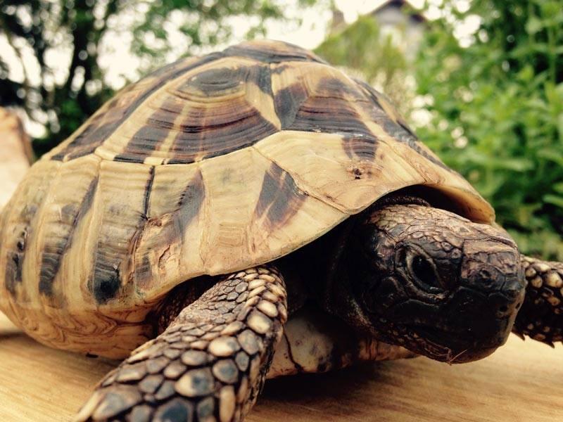 Водная черепаха — виды, что едят, где обитают и как обустроить место для содержания (90 фото)
