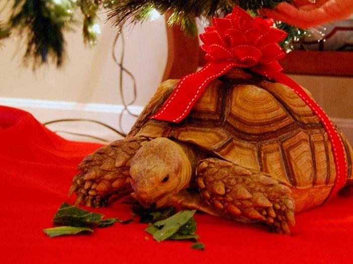 Черепаха: талисман богатства и долголетия
