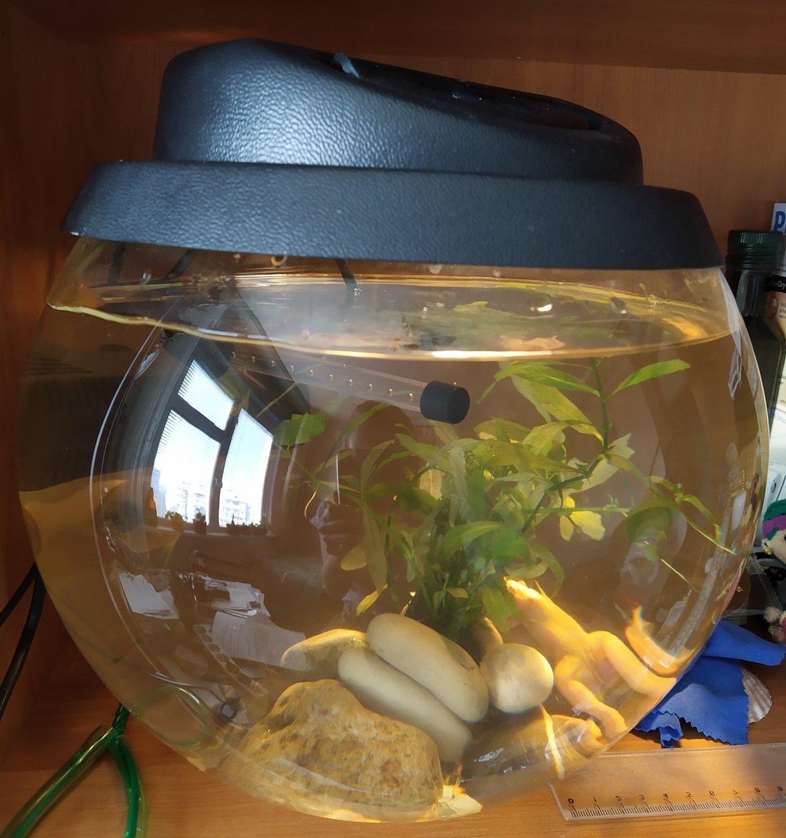 Чем кормить лягушку в домашних условиях