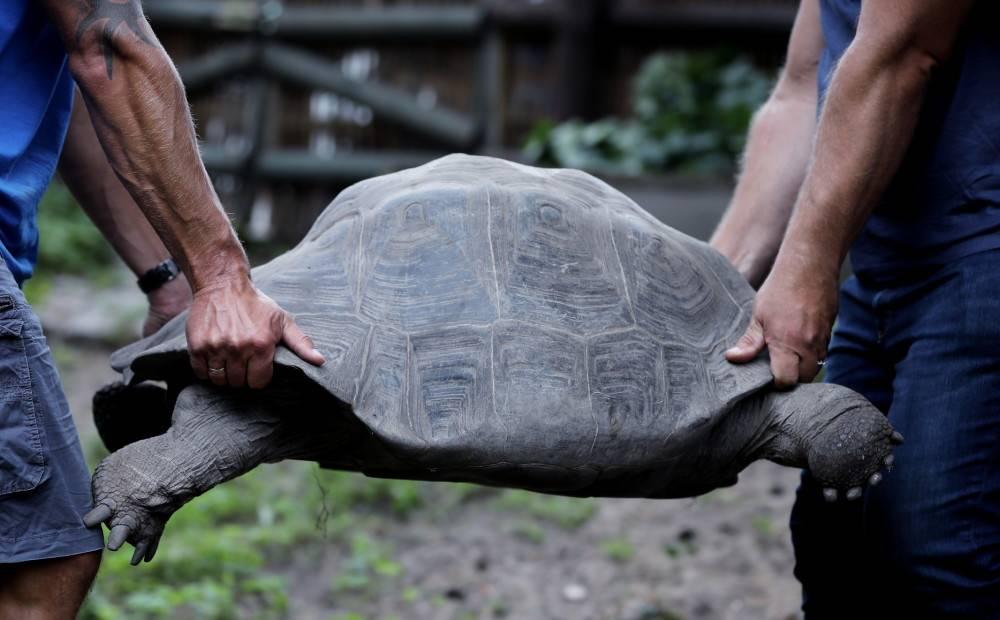 Домашние черепахи, как правильно содержать черепаху дома