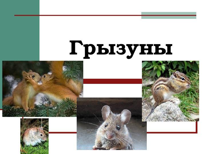 Грызуны: описание, образ жизни, представители отряда