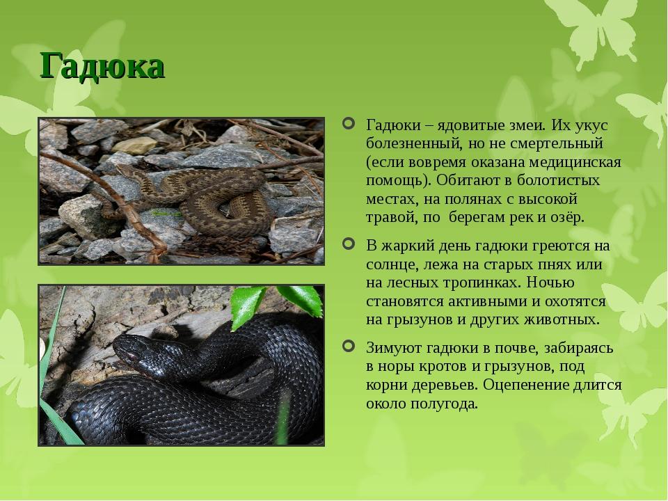 Гадюка обыкновенная (продолжительность жизни, размножение, яд змеи)