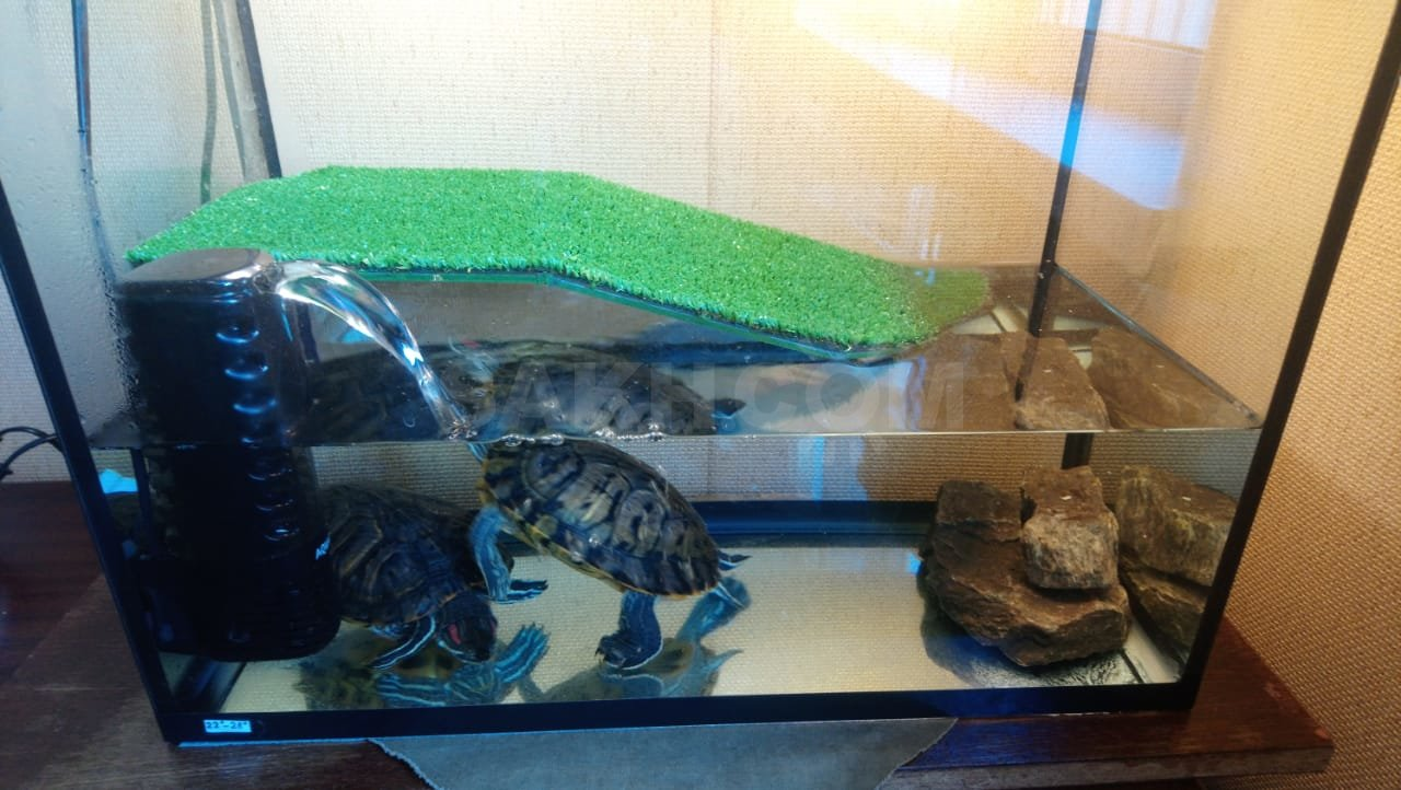Вода в аквариуме для красноухих черепах