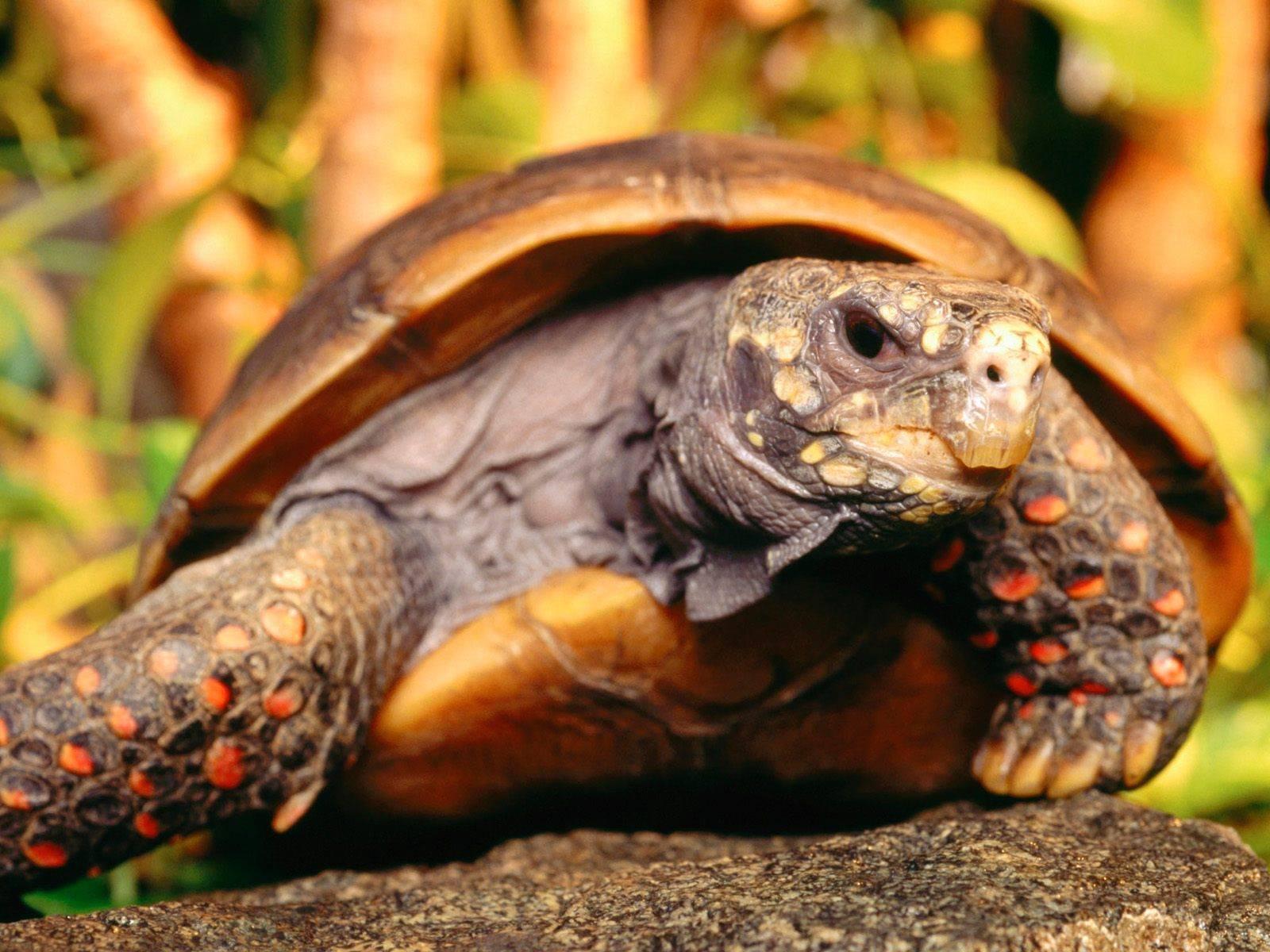 Черепаха - новые посты - стр. 2