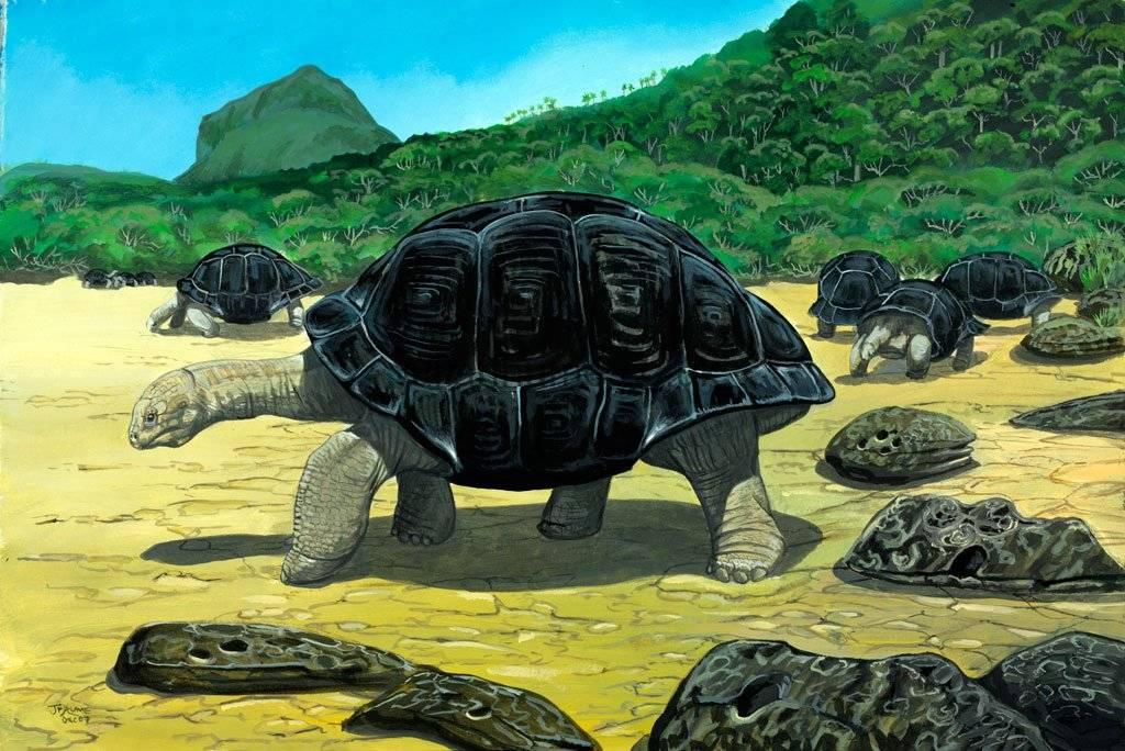 Животные, вымершие после 1500 года — википедия с видео // wiki 2