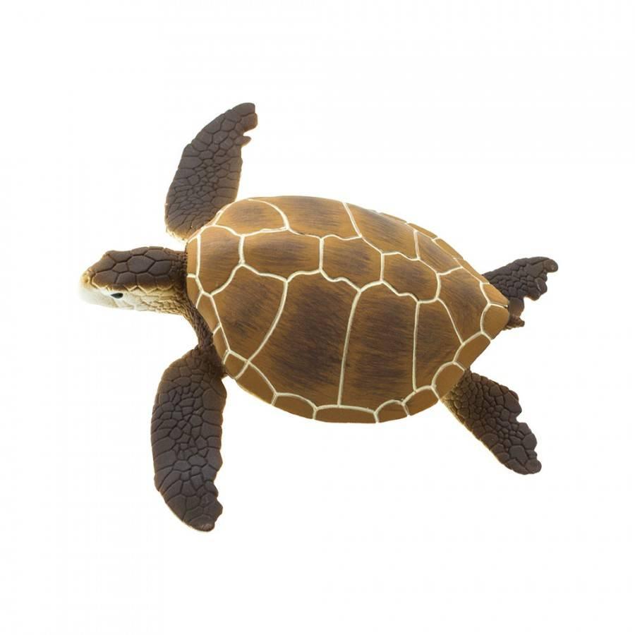 Aldabrachelys gigantea (гигантская, сейшельская черепаха) - черепахи.ру - все о черепахах и для черепах