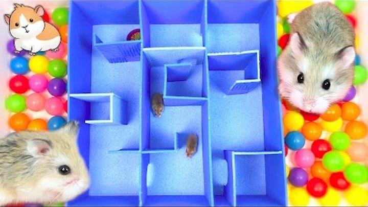 Как можно поиграть с хомяком
