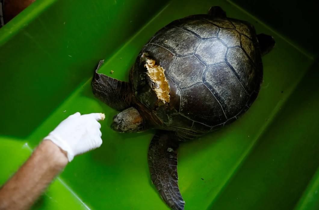 Волонтером в мексику: по следам черепах
