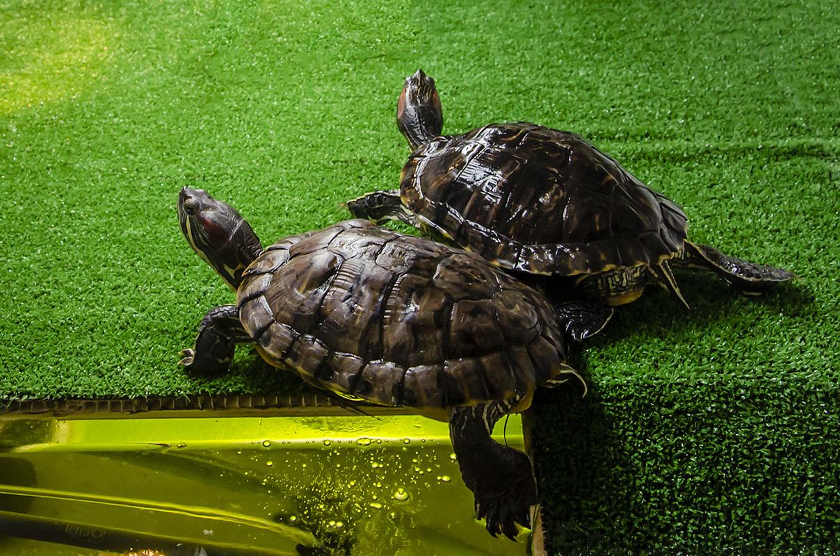 Какое имя подойдет для черепахи: список