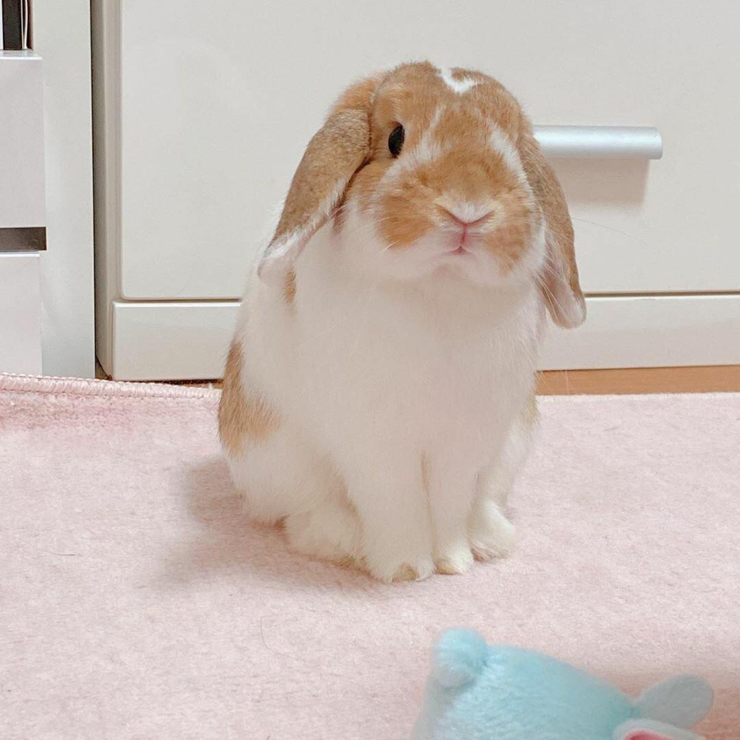 До скольки лет живут декоративные кролики