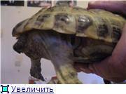 Как сделать укол черепахе видео