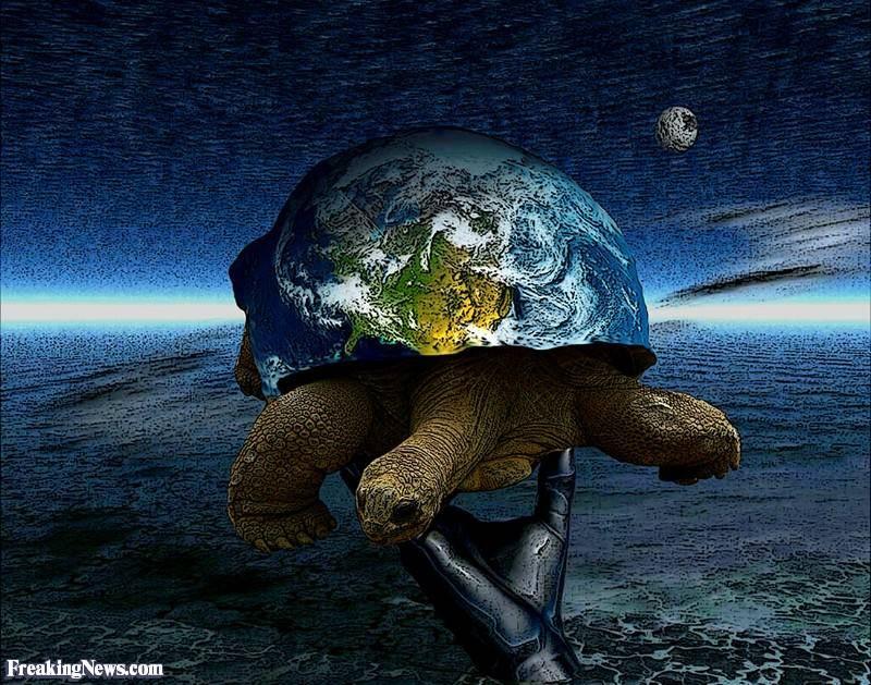 Водоплавающие черепахи виды. мифы, ошибки и заблуждения о черепахах. пресноводные домашние черепахи