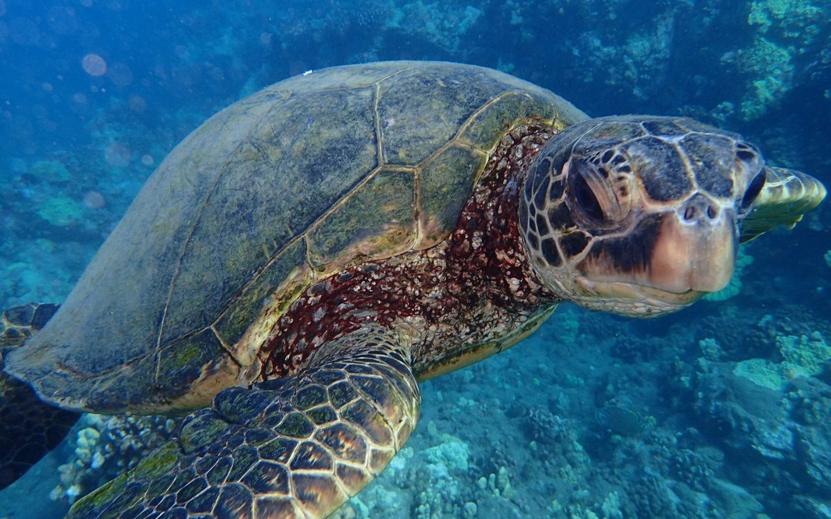 том, что морская черепаха фото и названия последнее