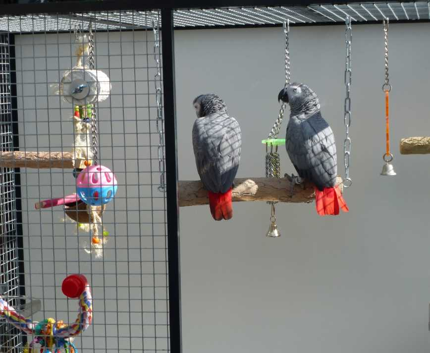 Где поставить клетку с попугаем?