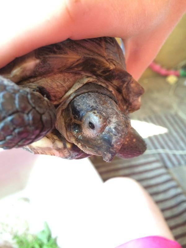 Болезни глаз красноухих черепах