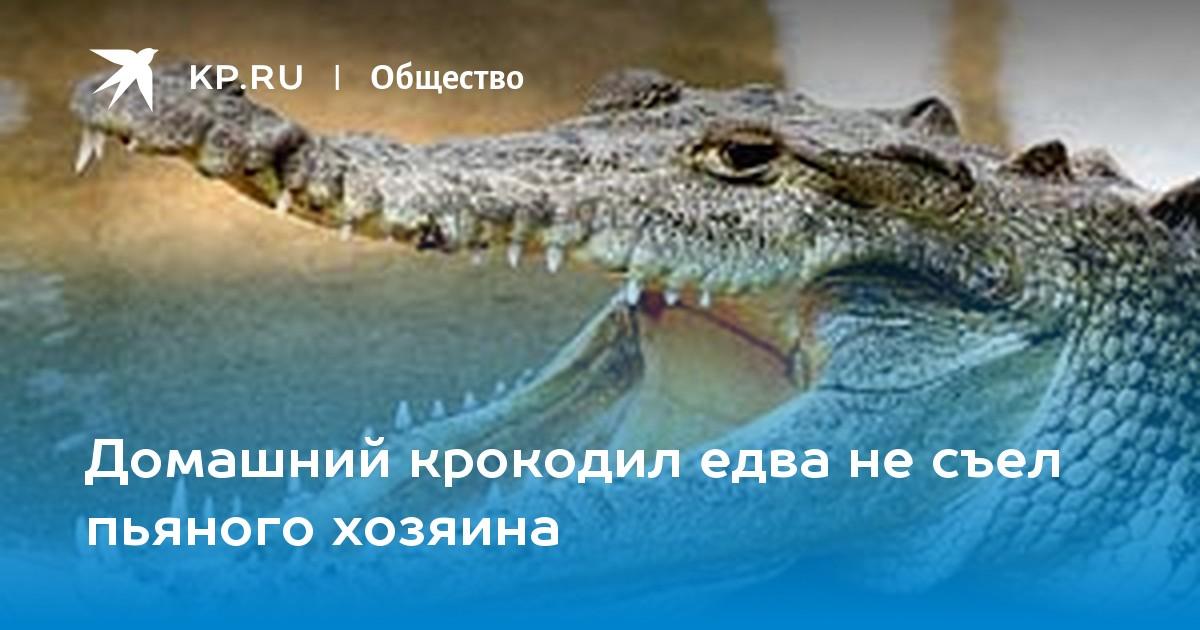 Домашний крокодил