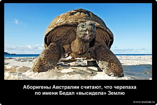 Древняя черепаха. мифы, ошибки и заблуждения о черепахах