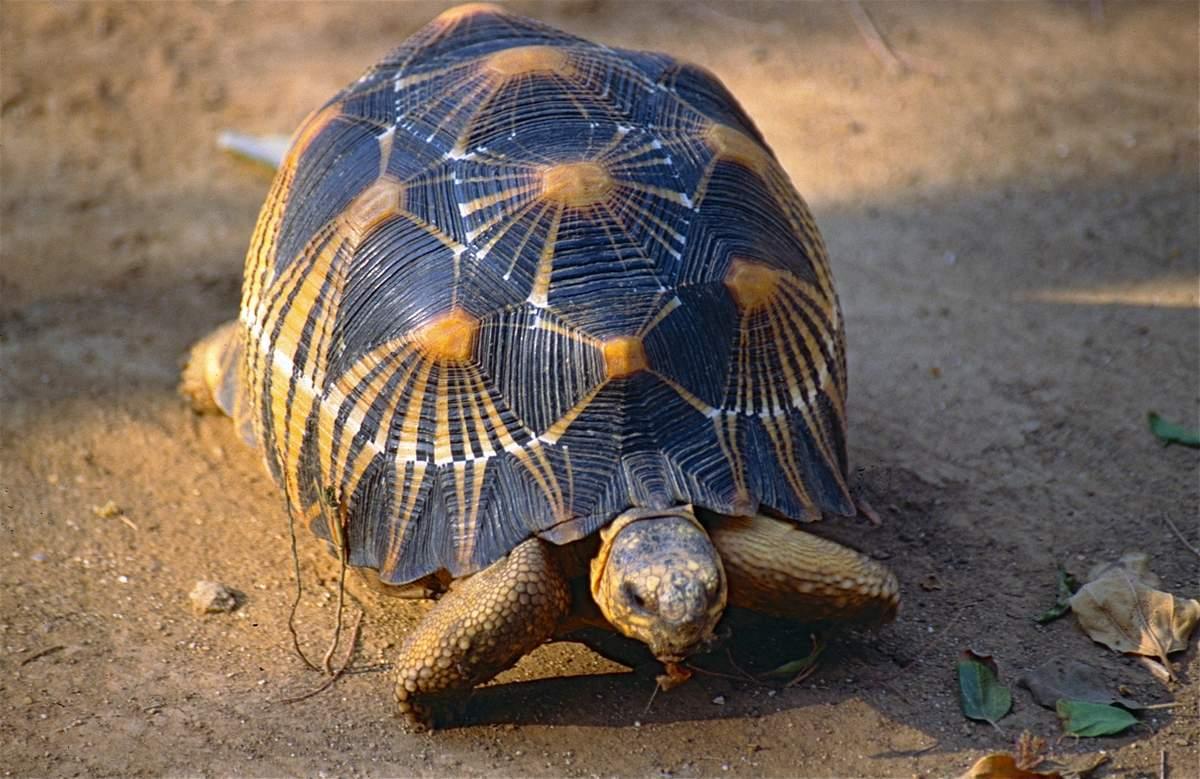 Черепаха - новые посты