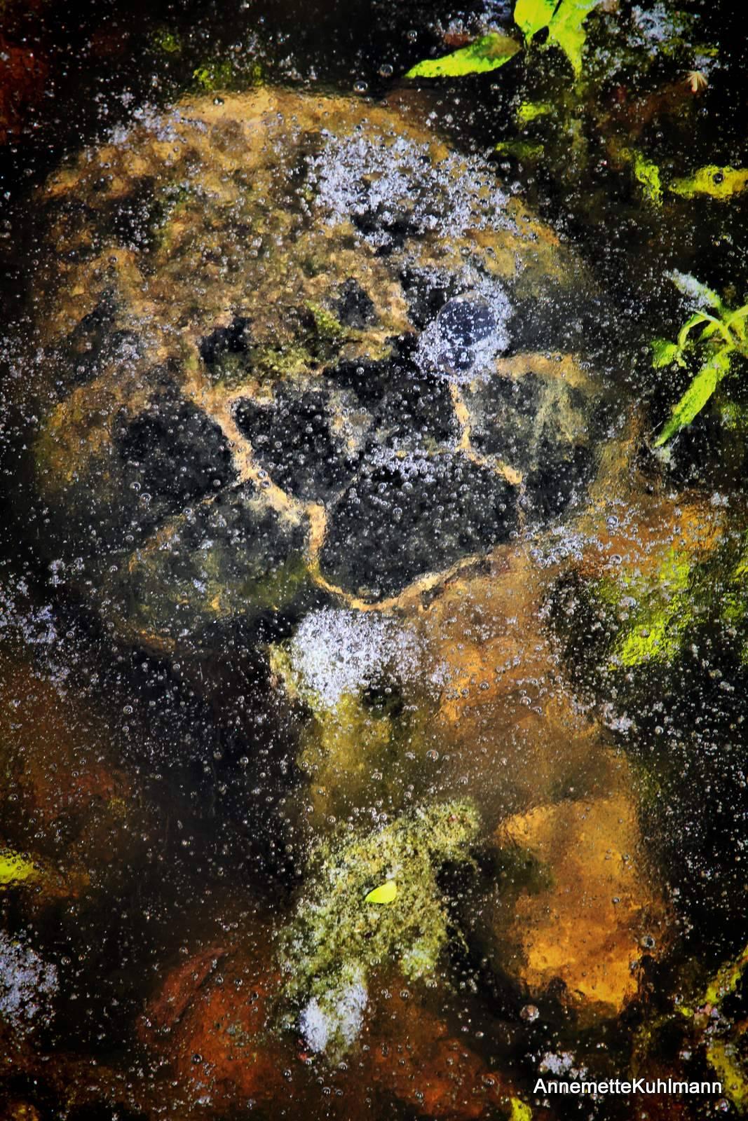 Где зимуют черепахи речные