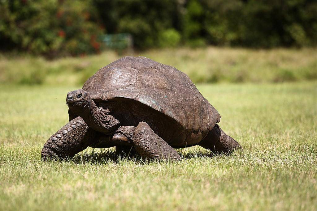 Самые долгоживущие животные на земле – список, описание, фото и видео