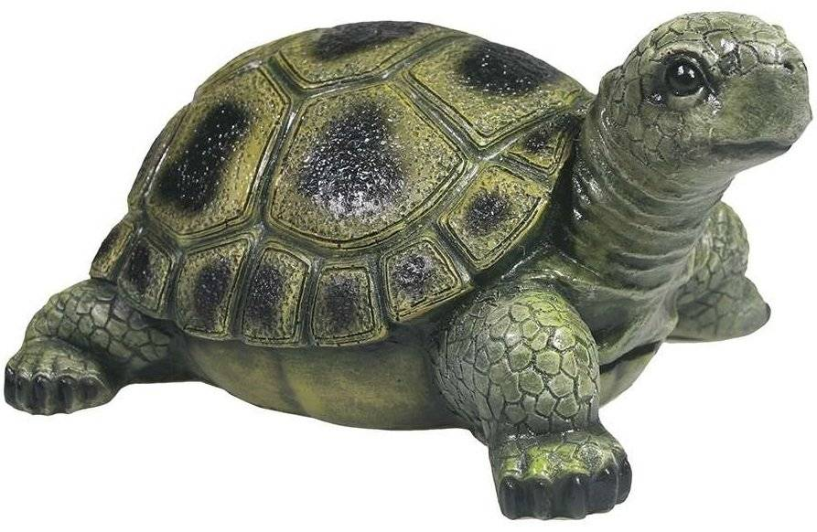 Chelonoidis denticulata (желтоногая черепаха)