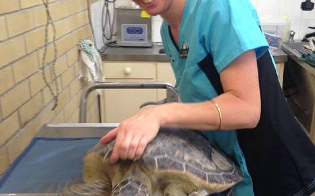 7 основных компонентов для кормления красноухой черепахи