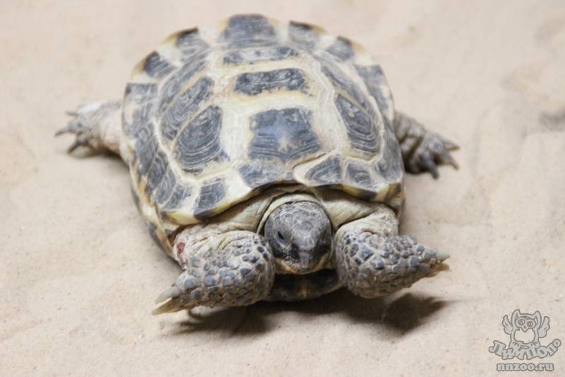 Научные статьи - черепахи.инфо