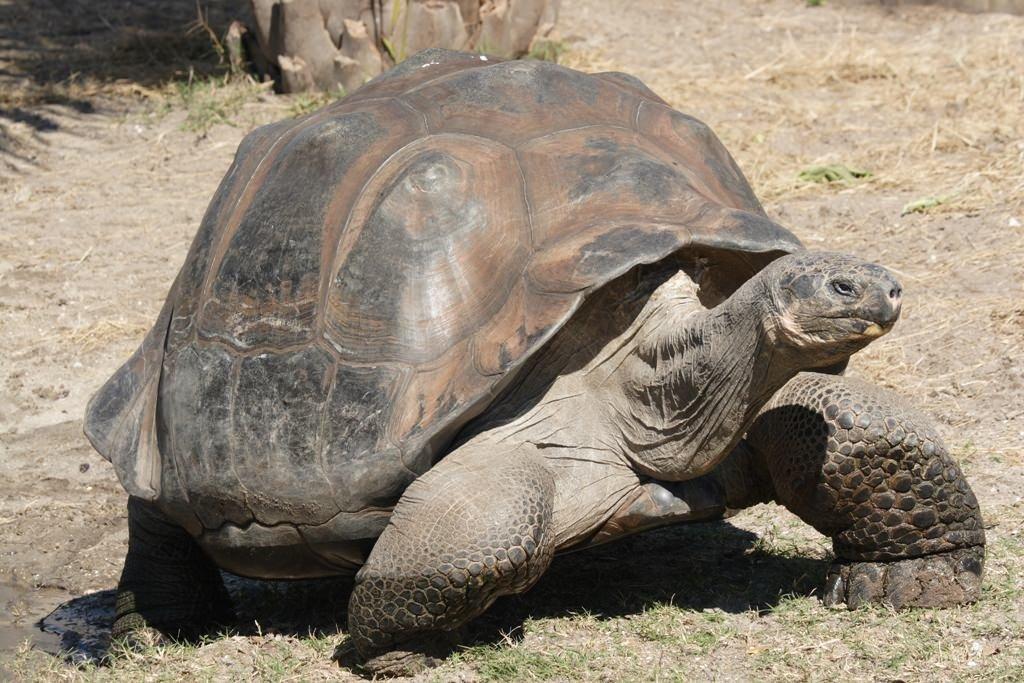 Самые старые черепахи в мире