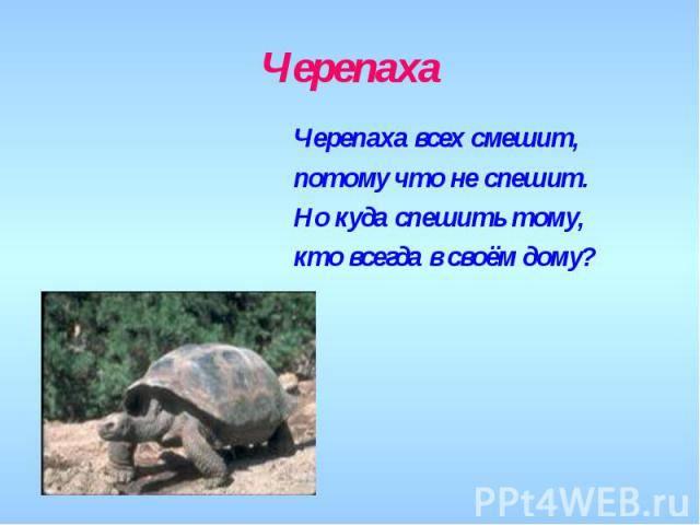 Загадки про черепаху для детей с ответами