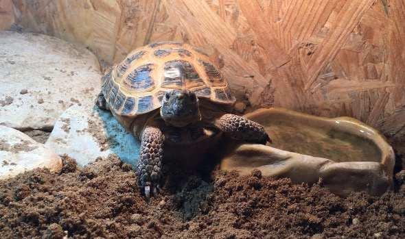 Поилка для черепахи