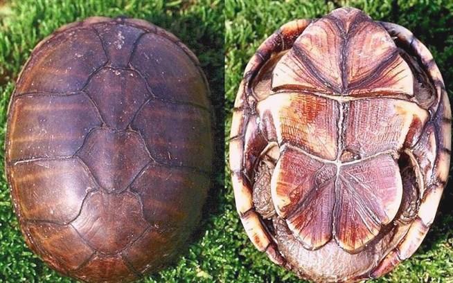 Могут ли черепахи покидать панцирь?