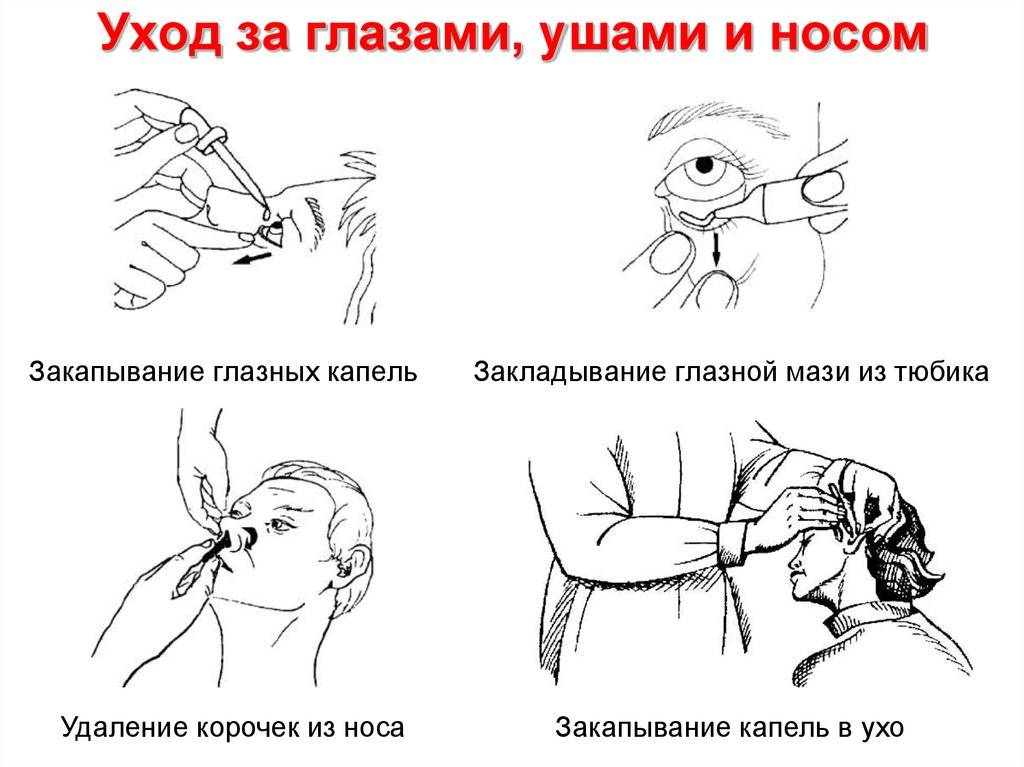 Как закапать черепахе глаза и нос