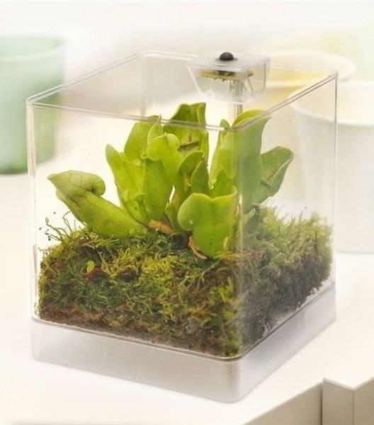 Выращивание комнатных растений без воды в аквариуме