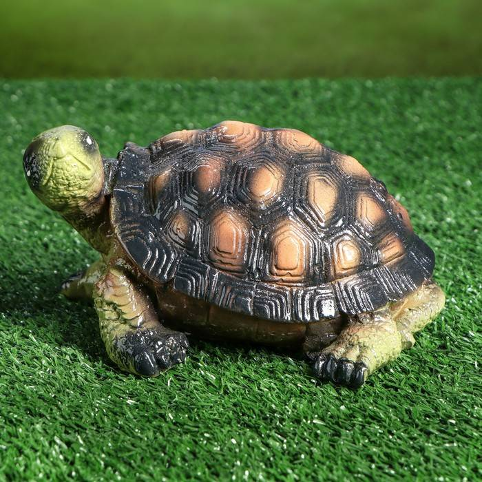 Chelonia mydas (зеленая черепаха, суповая черепаха) - черепахи.ру - все о черепахах и для черепах