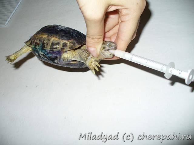 Лечение рептилий, черепах и других экзотических животных в москве: цены, отзывы и адреса