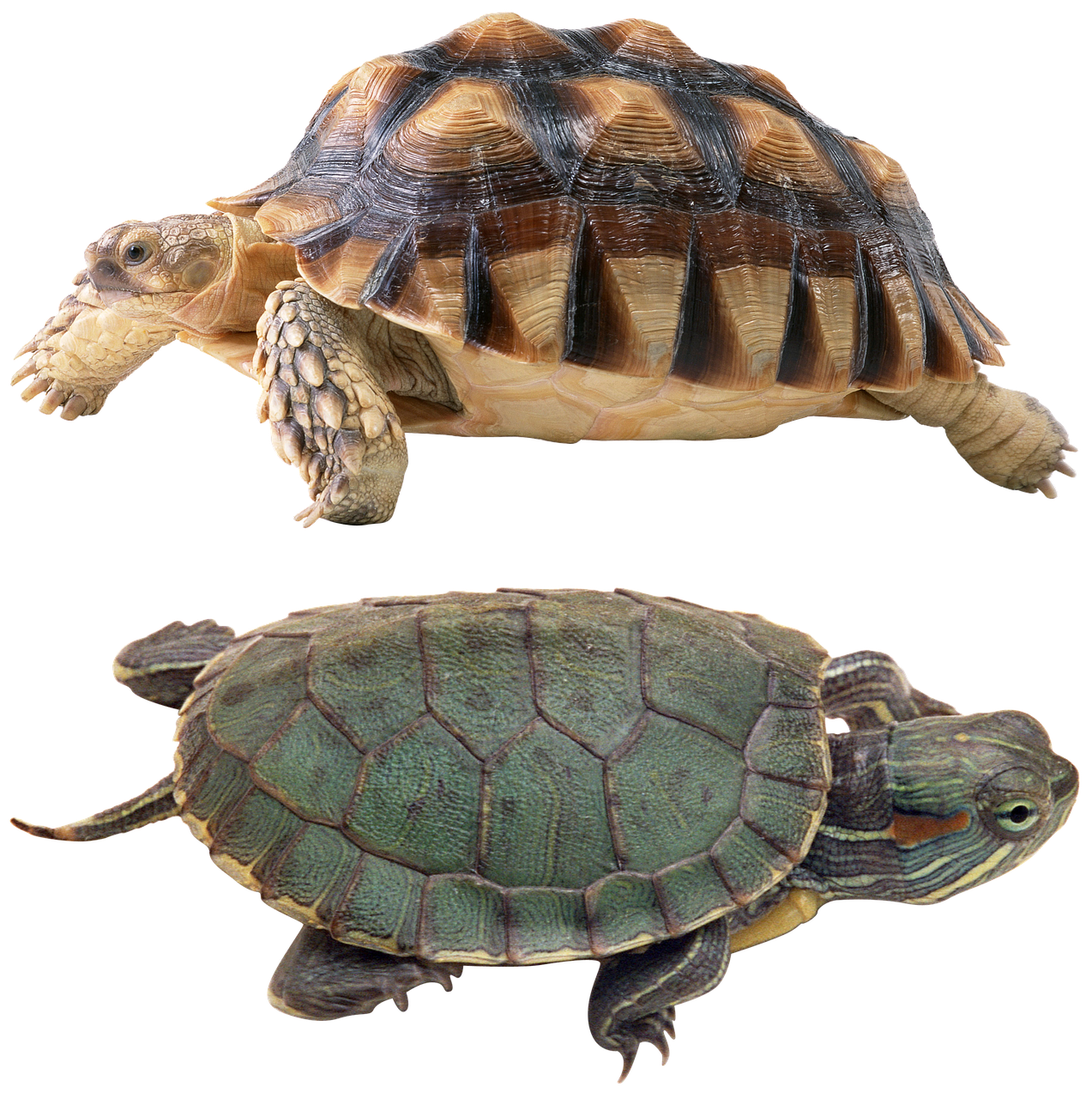 Turtles protestudo bessarabica from the late miocene of ukraine