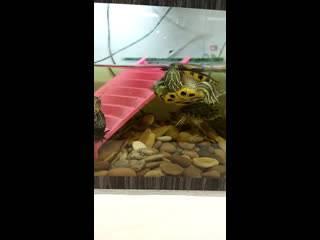Как и чем кормить черепаху в домашних условиях