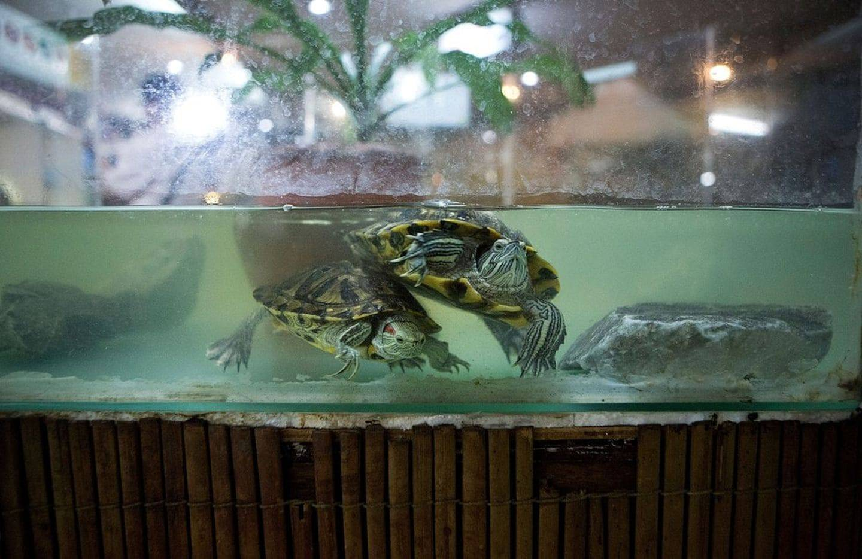 На черепаху может быть аллергия у ребенка на