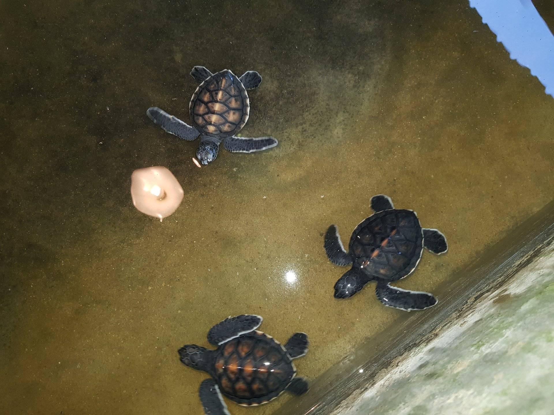 Место, где водится много-много больших черепах. и не только