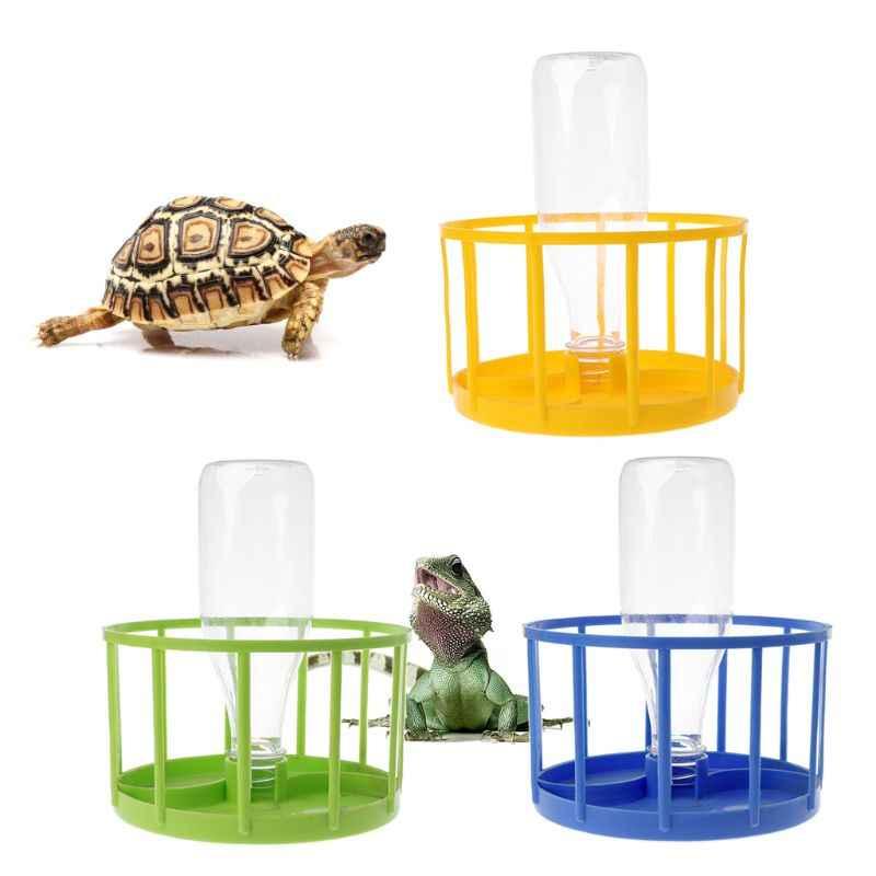 Уход за сухопутной черепахой в домашних условиях