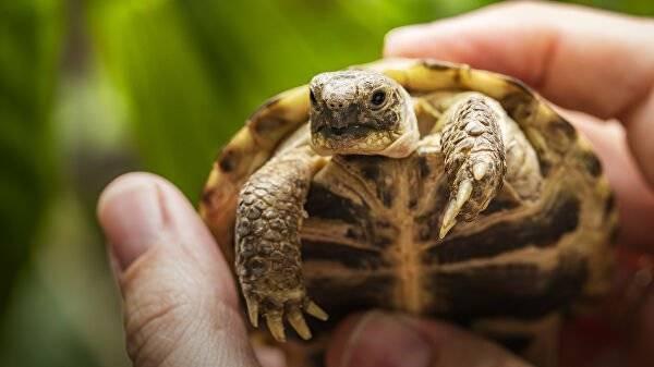 Как растет панцирь у черепахи