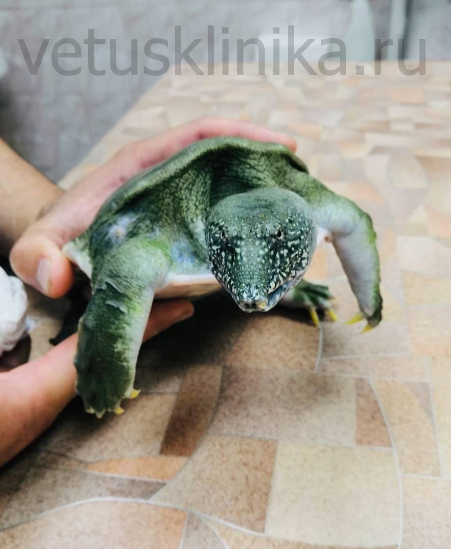 Болезни черепах. услуги герпетолога