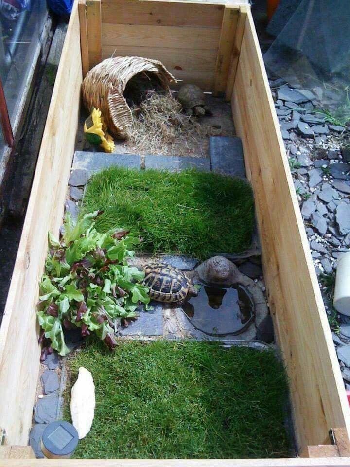 Вольер для черепах