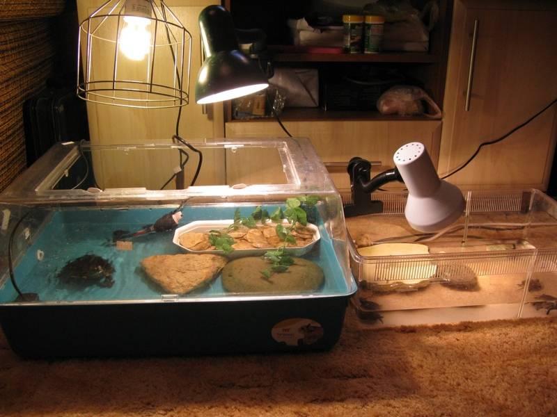 Вызов ветеринарного врача-ихтиолога для лечения рыб или черепах на дом в троицке в новой москве