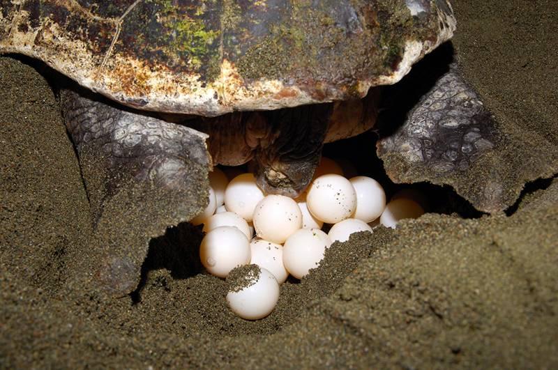 Разведение черепах – коротко о главном