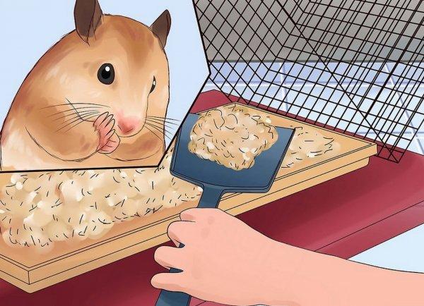 Что делать, если хомяк чихает