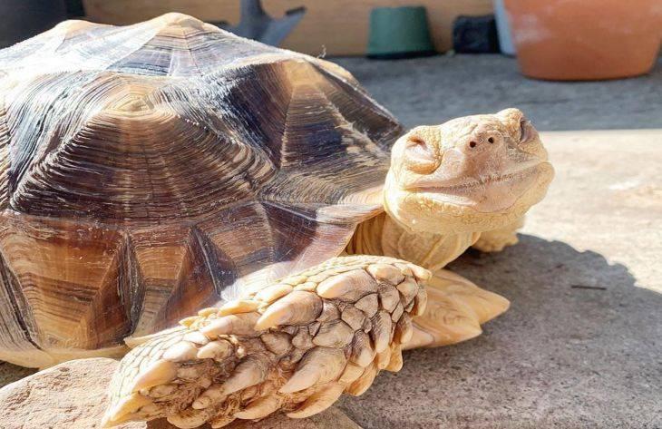 Черепахи «плачут» в руках спасателей // нтв.ru